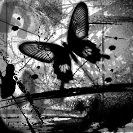 black_and_white_butterfly_by_m3ntal